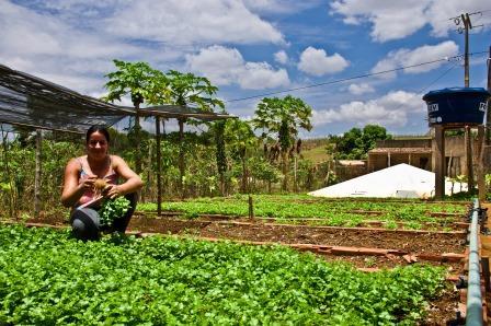 Programa P1+2 da ASA, implementa tecnologias sociais de captação de água da chuva para produção de alimentos | Foto: Acervo Asacom