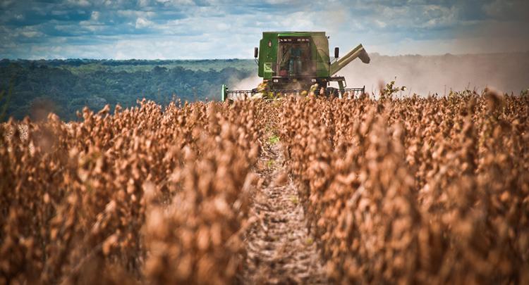 Safra de grãos deve recuar 6% em 2018, estima IBGE
