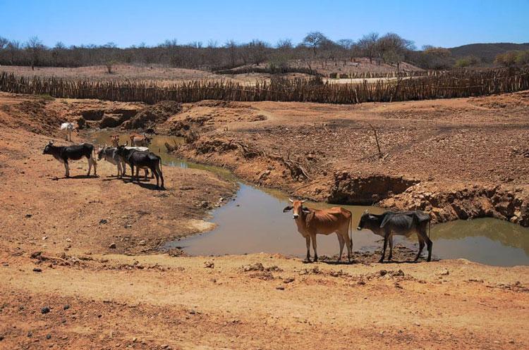 Sobe para 48 os municípios em situação de emergência por seca no Piauí. Veja quais!