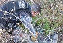 Polícia destrói plantação de maconha em operação no interior do Piauí