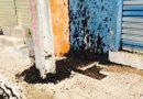 Após chuvas, besouros invadem cidade de São Raimundo Nonato; veja fotos e vídeo!